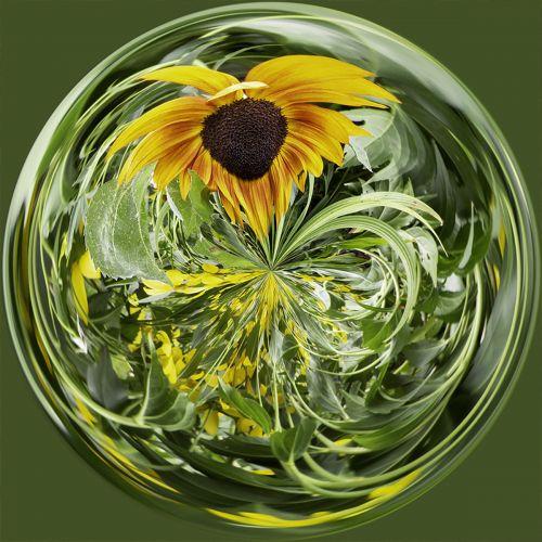 Sunflower PSC022