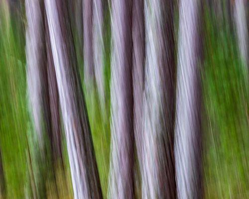Pine ICM