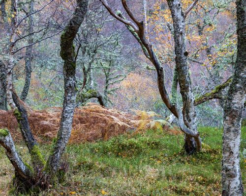 Bracken and trees