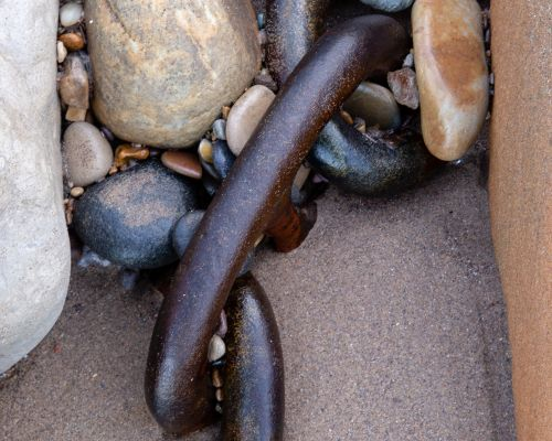 Chain in sand, Whitby