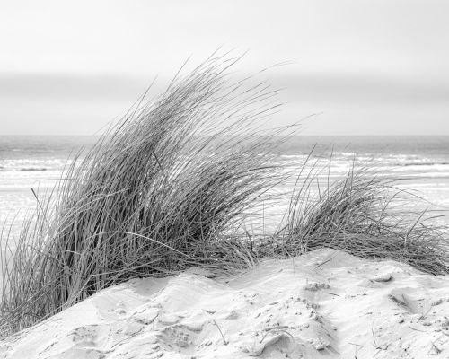Grass in sand dune