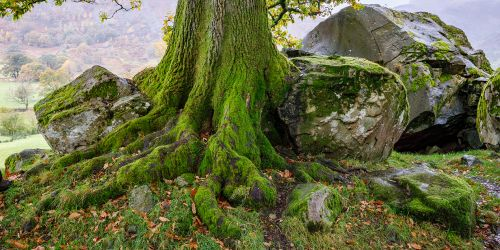 Tree surrounded by boulders