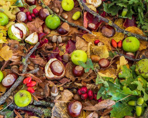 Autumn Crab apples