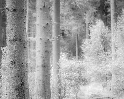 Trees in mono