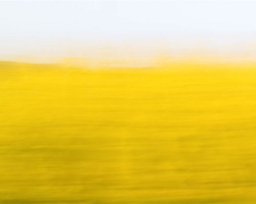 Rapeseed in the fields at Morton-on-Swale using ICM