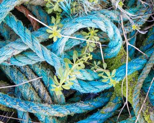 Weed in ropes