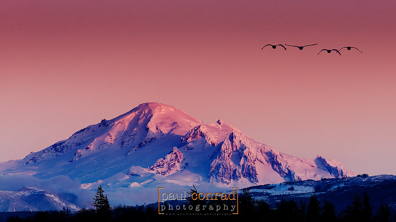 The alpenglow on a snow-capped Mount Baker as seen from Ferndale Road north of Bellingham, Wash., on Friday Jan. 11, 2013. © Paul Conrad/Paul Conrad Photography - Rights limited to laptop/desktop computer usage only. No printing allowed.