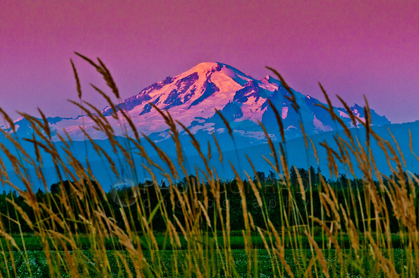 The setting Sun alights Mount Baker in alpenglow on Monday evening July 22, 2013.  (© Paul Conrad/Paul Conrad Photography), bellingham wedding photographer, bellingham photography