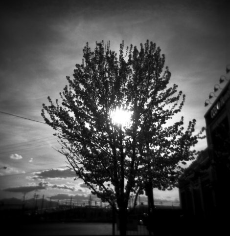 holga black and white film street photography