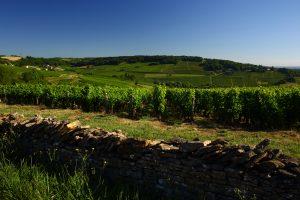 Vignoble de la Côte Chalonnaise entre Montagny-les-Buxy et Buxy