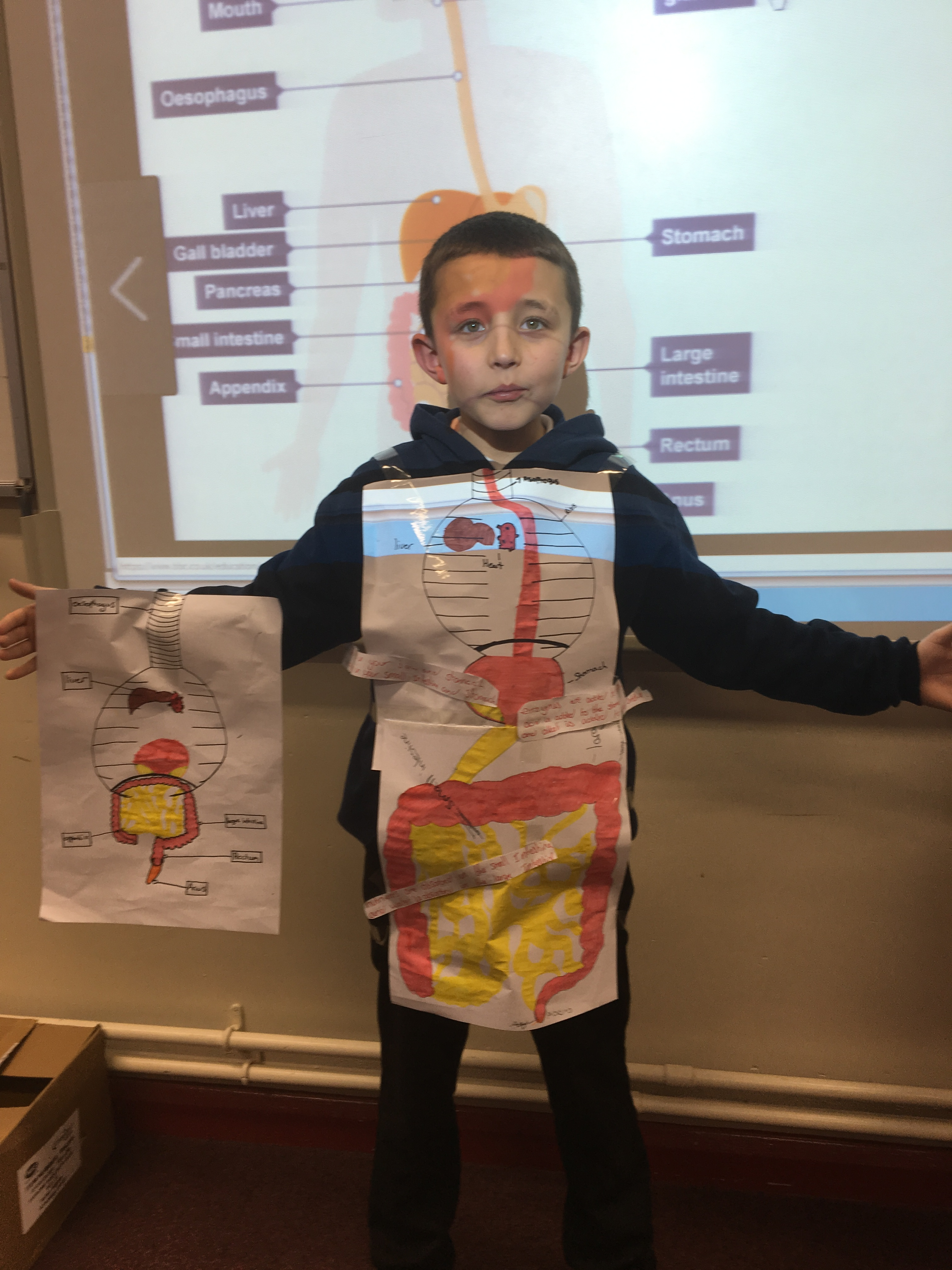 Year 8 Learn About The Digestive System Pinboard