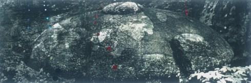 Stone Mushroom - larger image