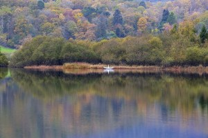 'Swan' Elterwater Reflections, Lake District Lake District Landscapes Autumn
