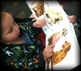 "Wow.. Daniel spotted this book, pulled it off the shelf, said ""dog"", sat in my lap and opened it up! Growing up to fast!"