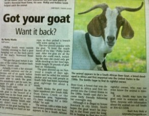 Got your goat? South Hills residents seek owner of mystery goat. http://bit.ly/ca6Dh7