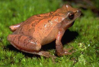 Fun with Big Frog