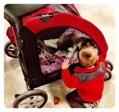 Cat in the Stroller?