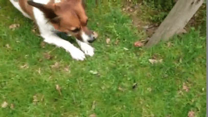 Dog vs BumbleBee (Spoiler: CK Wins!)