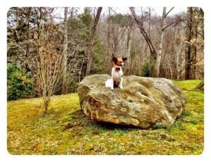 C.K. Rocks!