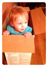 Lily in a box
