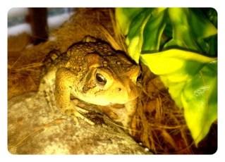 Daniel's New Big Frog