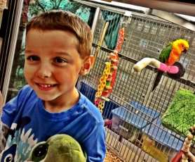 "Daniel loves ""Amazon Parrot"" at the pet store"