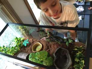 We upgraded Daniel's terrarium from a 10 to 20 gallon aquarium