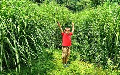 Wild man in the weeds