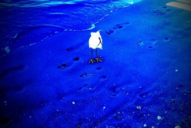 Kunstpause #22 Beach Creatures by birgit pauli-haack aka #pauli