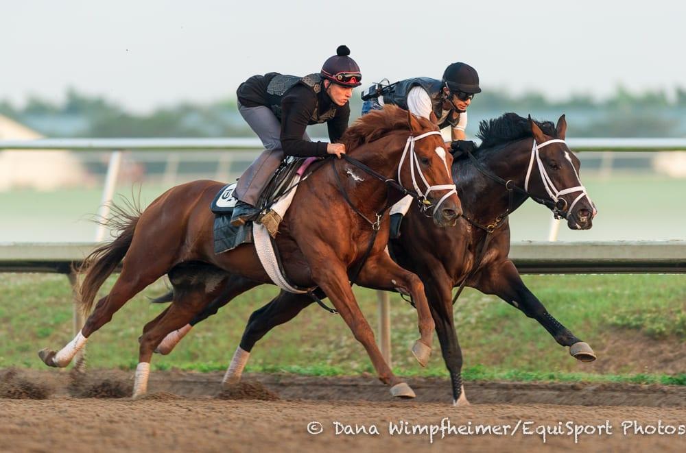 Verrazano Widens Derby Futures Lead Horse Racing News