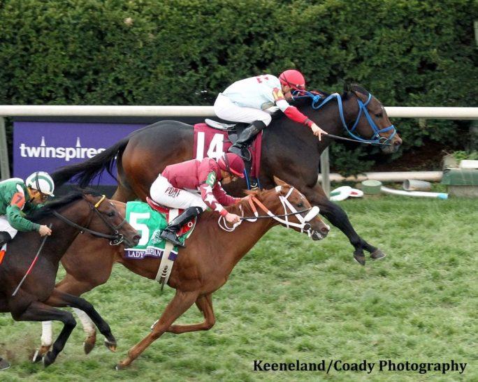 Breeders Cup Winner Mongolian Saturday Retired Horse