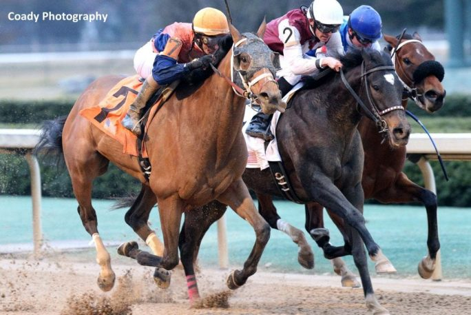 Call Pat Circles Field For Bayakoa Victory Horse Racing