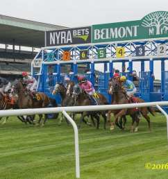 the precautionary quarantine of barn 44 at belmont park for equine herpesvirus 1 remains in place after a follow up test has come back positive on one horse  [ 3600 x 2400 Pixel ]
