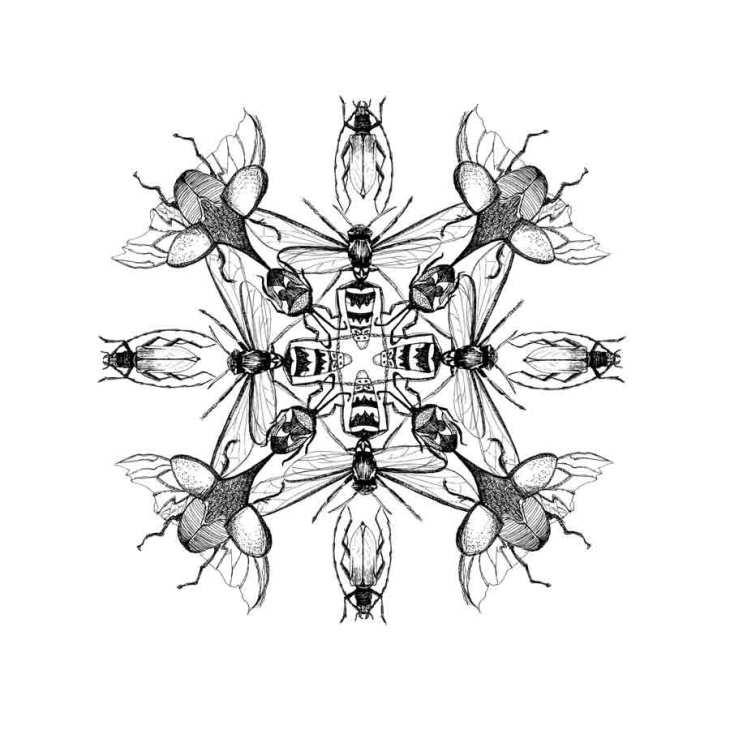 Pauline-Huard-design-textile-stylisme-illustration-graphisme-insecta-rosace-1