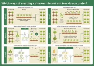 Tree_breeding infographic