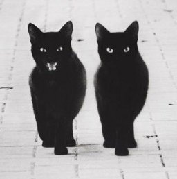 Two-black-cats