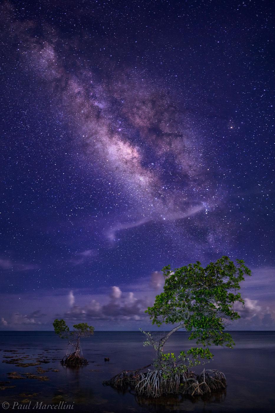 Milky Way and Mangroves  Florida Keys FL  Florida
