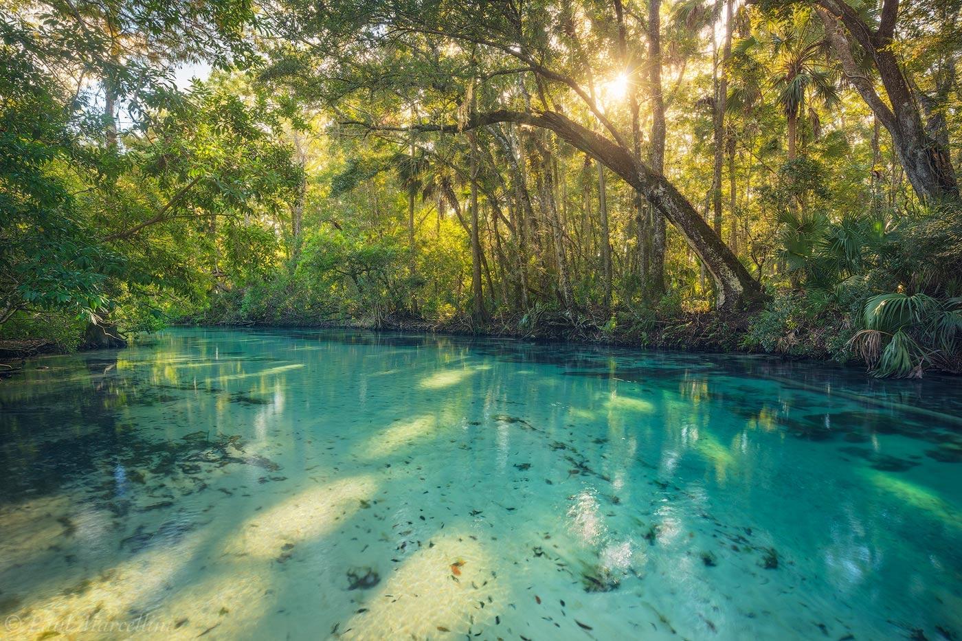 The Land of Mermaids  Weeki Wachee Florida  Florida