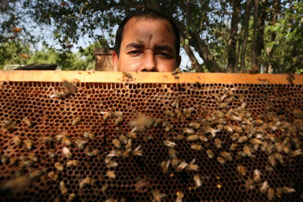 Arabian beekeeping