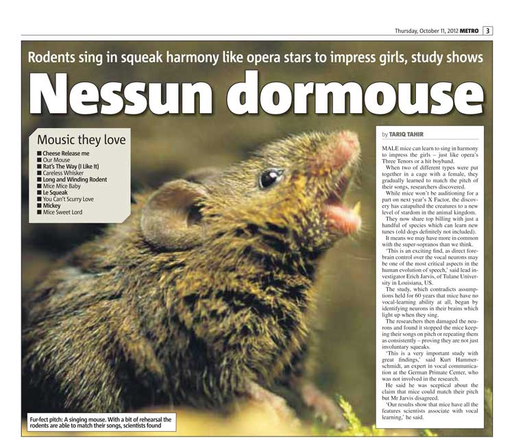 Nessun dormouse: Two words that shook the Twittersphere