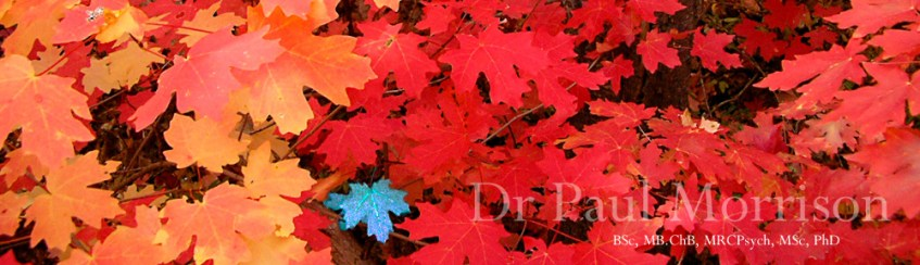 Autumn leaves lying on the ground, link to psychiatrist Dr Paul Morrison