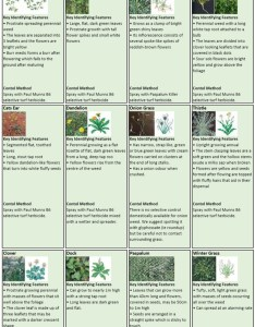 Leave  comment also paul munns blog weeds category weed identification chart rh paulmunnsinstantlawn