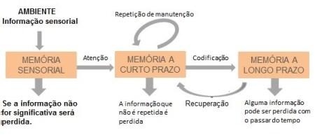 O cérebro e a memória