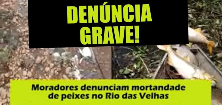 🚫🚫🚫 MORTANDADE DE PEIXES NO RIO DAS VELHAS É GRAVE E PRECISA DE APURAÇÃO URGENTE!