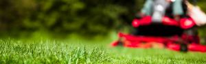 3 Tips for Spring Lawn Care