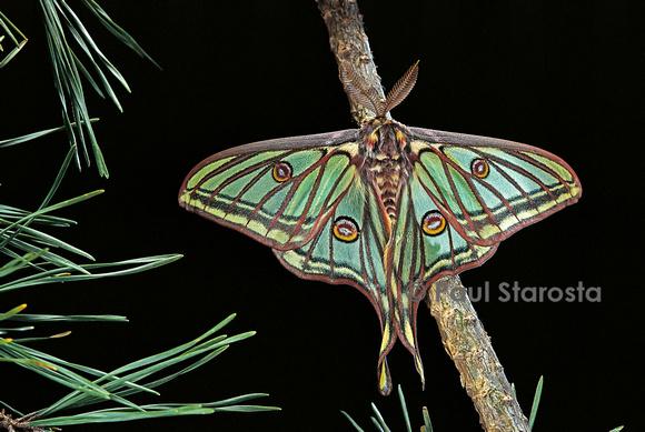 Résultats de recherche d'images pour «isabelle papillon»