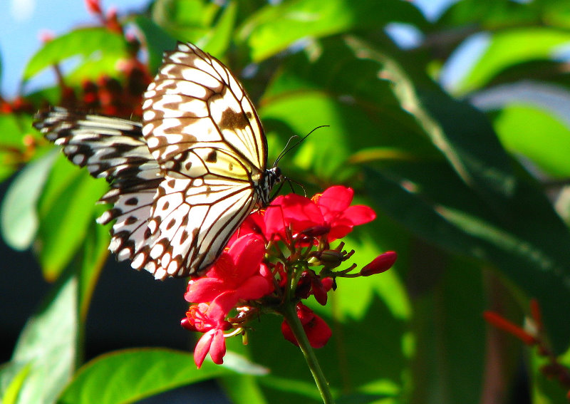 butterfly world coconut creek
