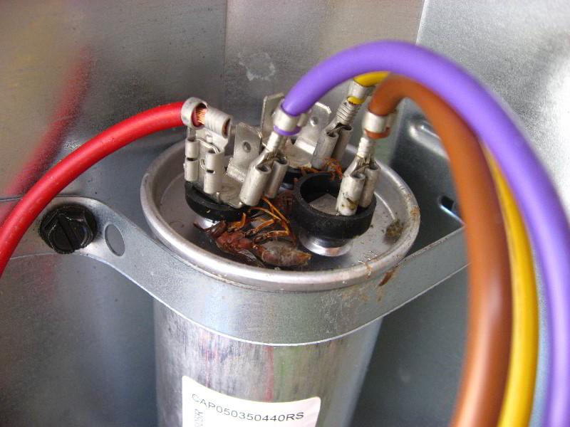 tempstar furnace parts diagram 2002 honda accord audio wiring flame sensor location, tempstar, get free image about