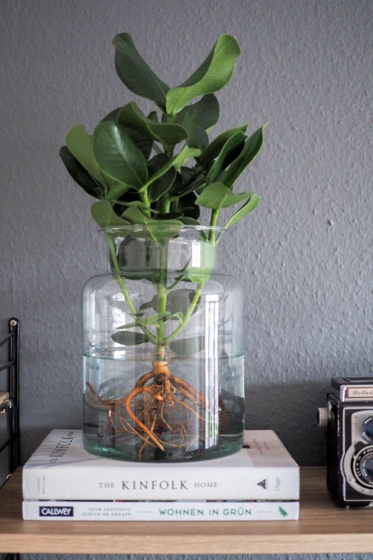 Water Plants der neue Pflanzentrend  paulsvera