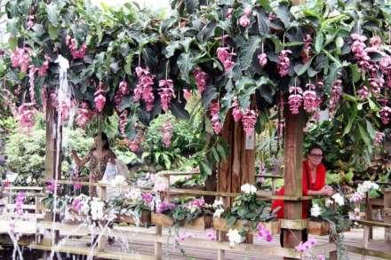 Orchideëen Hoeve: Vlindertuin